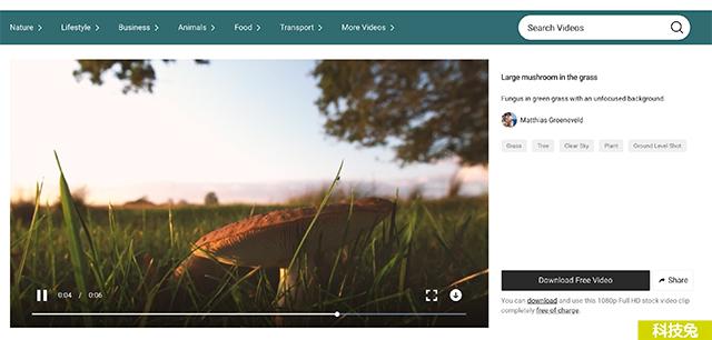 Mixkit 免費影片 免費音樂線上下載